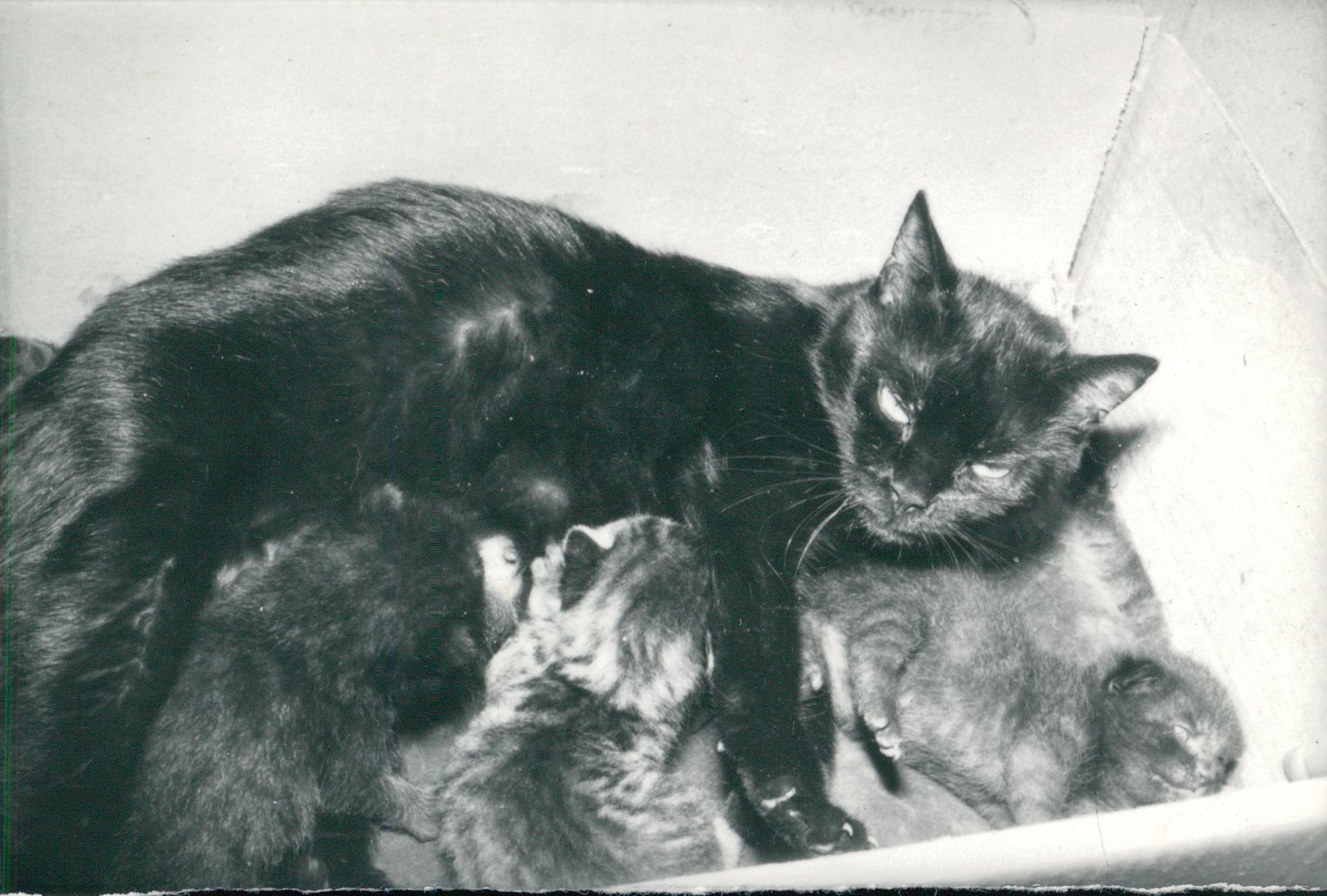 Macskacsalád