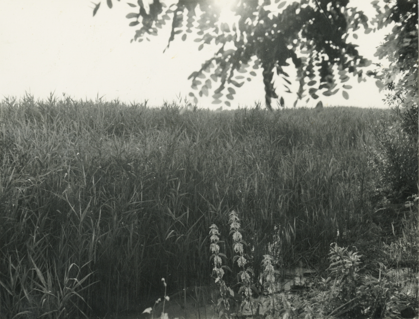Balatonakarattyai tópart