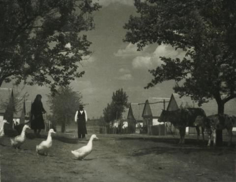 Lajosmizsei utcakép háziállatokkal